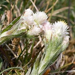 Mountain Everlasting